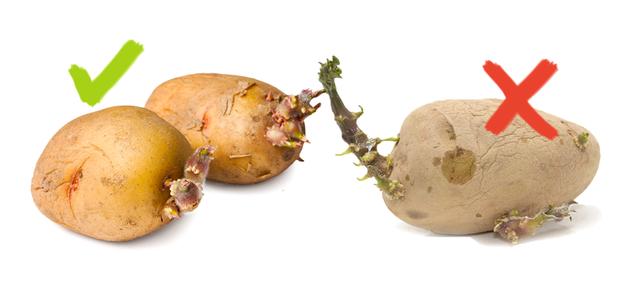 potato sprouts
