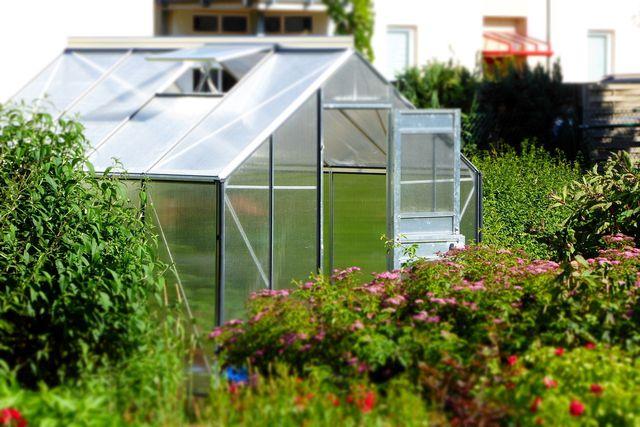 Das Klima im Gewächshaus schafft optimale Grundvoraussetzungen, um deine Tomaten nachreifen zu lassen.