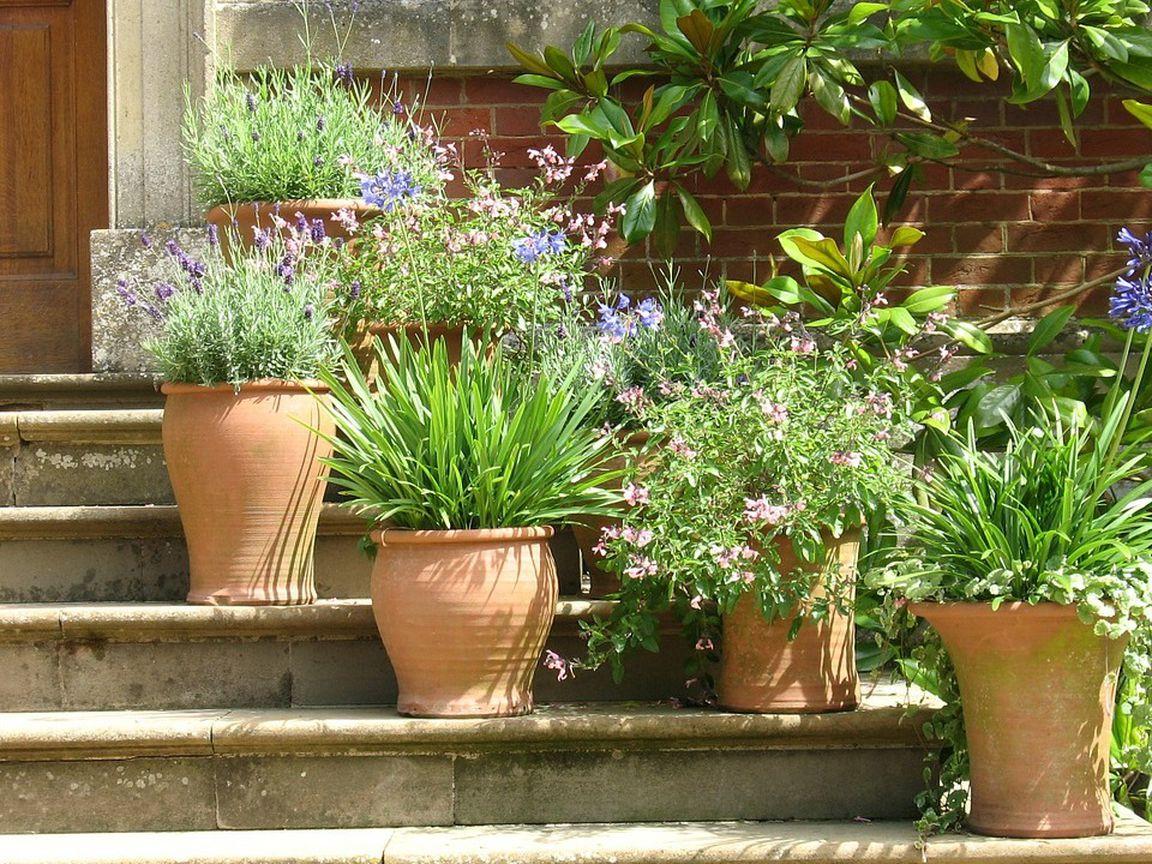 Mediterrane Pflanzen Diese gedeihen besonders gut auf dem Balkon ...