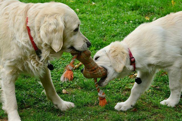 Verschiedene Bundesverbände garantieren eine gute Ausbildung für Mensch und Hund.