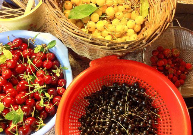 Beeren Vielfalt im Sommer