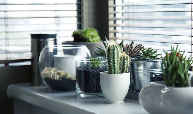 Pflanzen fürs Badezimmer: Diese eignen sich besonders gut - Utopia.de
