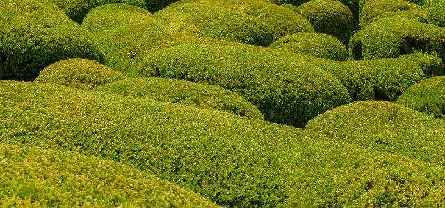 Buchsbaum Schneiden Pflanzen Und überwintern Unsere Garten Tipps