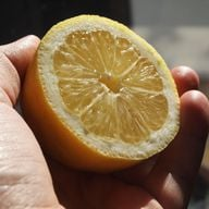 Handpflege: Zitronen halten deine Haut geschmeidig und sanft.