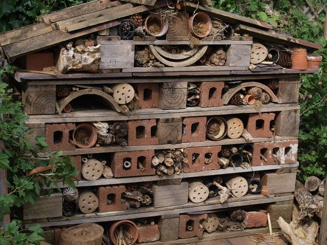 Make a nice little home for bees and other insects!