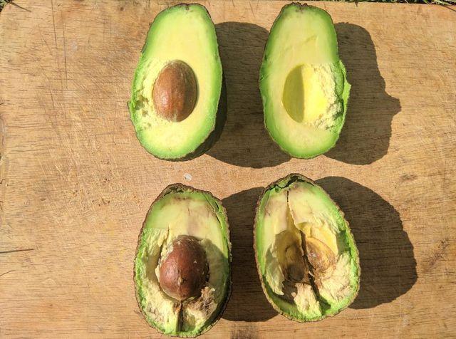 Schimmel Avocado