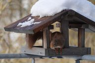 Vogelhäuschen kannst du ganz einfach zu einer Futterstelle für Eichhörnchen umfunktionieren.