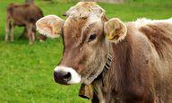 Mit nachhaltiger Ernährung kannst du Tierleid beenden.