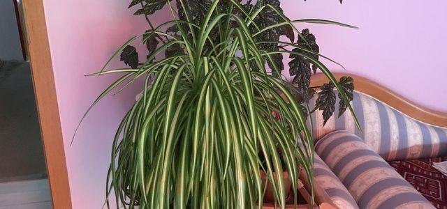 Pflegeleichte Zimmerpflanzen Die Auch Ohne Grünen Daumen Wachsen