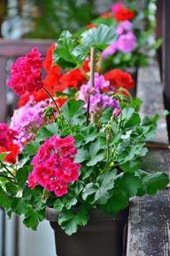 Pflanzen Für Pralle Sonne Diese Pflanzen Sind Pflegeleicht Und