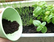 Coffee grounds uses in the garden as compost