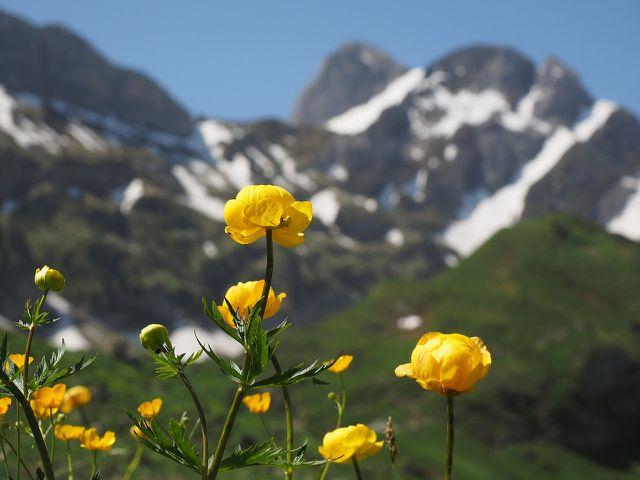 Alpine Gebirge beherbergen eine Vielzahl an Pflanzen. Der Skitourismus und der Kunstschnee bedrohen ihren natürlichen Lebensraum.