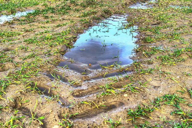 In verdichteten Böden kann Wasser nicht mehr versickern.