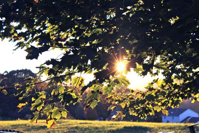 Sunlight Photosynthesis