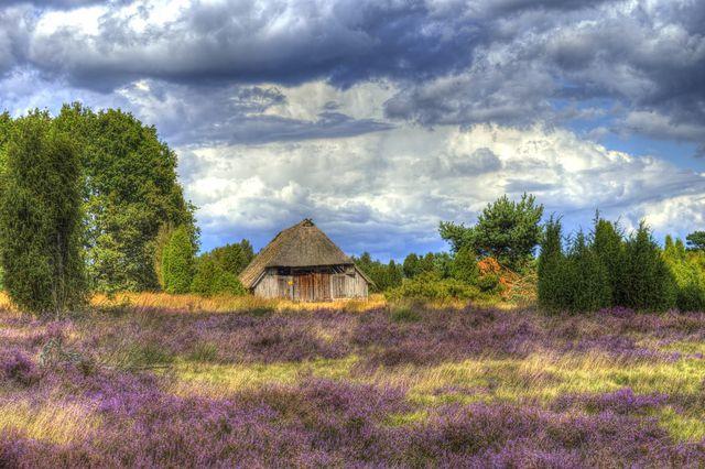 Das Highlight des Heidschnuckenweges ist die Lüneburger Heide.
