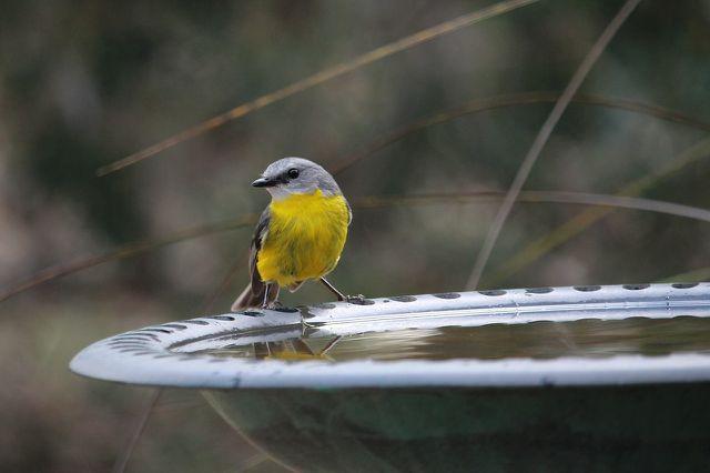 Vögel sollten die Umgebung der Tränke gut beobachten können