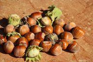 Auch Nüsse enthalten sekundäre Pflanzenstoffe