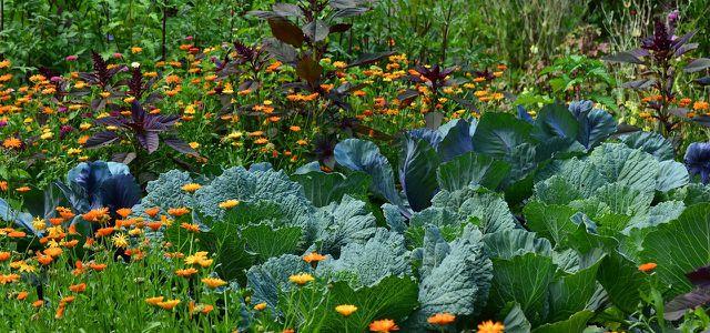 Gemüse, Garten