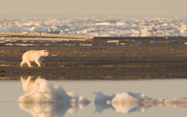 Geht der Klimawandel zu schnell, können Tiere sich nicht anpassen