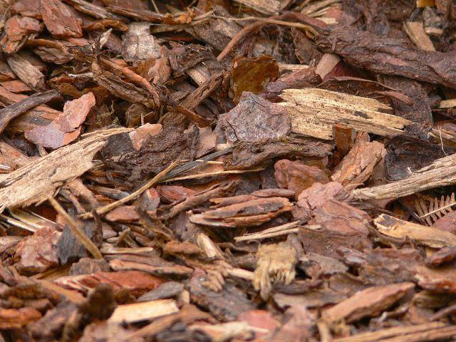 Rindenmulch fördert die Humusbildung und hält den Wurzelbereich der Sträucher feucht.