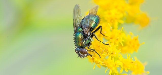 Insekten vertreiben Mücken Wespen Ameisen Fliegen