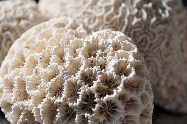 Das Sterben von Korallen geht mit schwerwiegenden Folgen für die Natur einher.