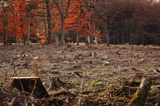 Der Mensch greift in die Regulationsmechanismen der Erde ein – beispielsweise durch Waldrodung.