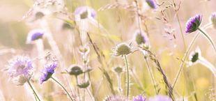 Blühpatenschaft
