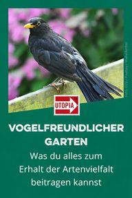 Vogelfreundlicher Garten: Das kannst du zum Erhalt der Artenvielfalt beitragen